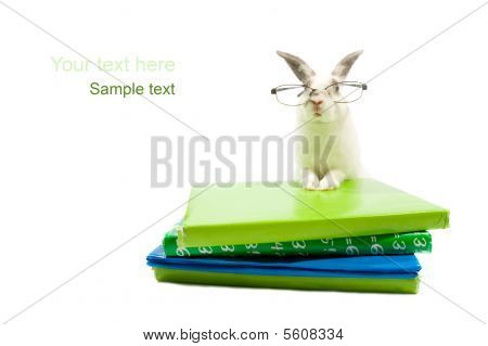 White Rabbit With Glasses Is Leaning On A Stack Of Schoolbooks