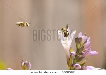 Bees Coming