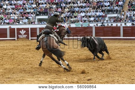 Spanish bullfighter on horseback Diego Ventura bullfighting on horseback