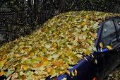 stock photo of transpiration  - abandoned car completely covered with autumn leaves - JPG