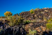 picture of valley fire  - Valley of Fire Lava Field in New Mexico with Interesting Flow Stone Lava Rocks and Cactus with Other Desert Plants - JPG