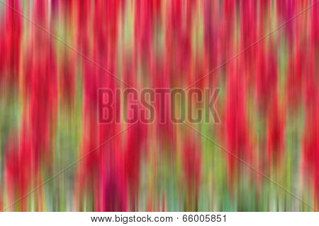 Abstract of Red Celosia Flowers Background