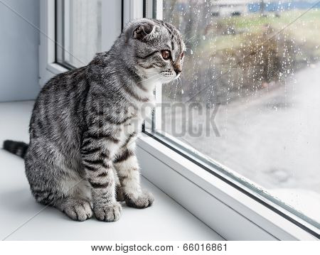 Cat Sits On A Windowsill