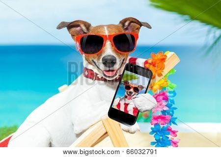 Summer Selfie Dog