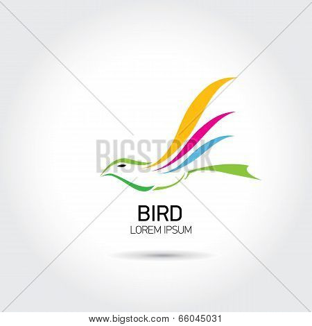 Color Bird abstract flying icon design template.