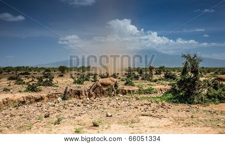 Small whirlwind with donkey
