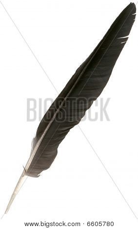 Black Eagle Feather Isolated Over White Background