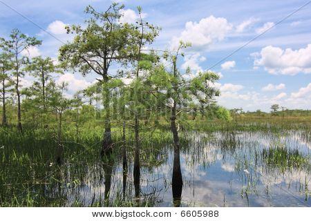 Everglades Landscape 6