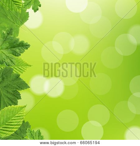 Green Leaves Frame, Vector Illustration