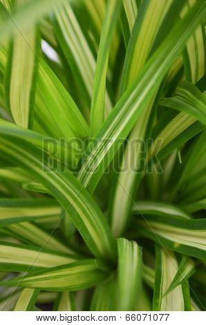 Green Shrub Leaves Background