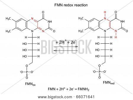 Illustration Of Fmn Redox Reaction