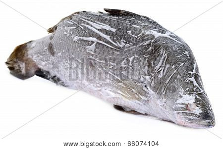 Frozen Barramundi Or Koral Fish Of Southeast Asia