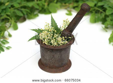 Medicinal Herbs On A Vintage Mortar