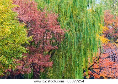 Colorful Autumn Leaves at Ueno Park in Tokyo