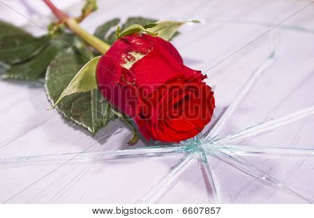 Red Rose On The Broken Glass