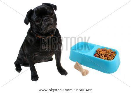 Pug And Dogfood