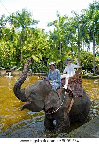 Elephant Safary Park In Bali.