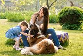 image of puppies mother dog  - mother and child playing with dog on nature - JPG