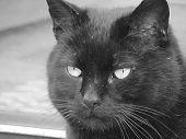 Starring Black Cat poster