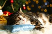 image of carpet  - Cute cat lying on carpet with Christmas decor - JPG