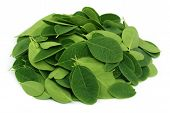 picture of moringa  - Close up of Moringa leaves over white background - JPG