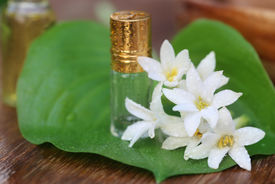 foto of tuberose  - Close up of Tuberose or Rajnigandha of Southeast Asia with herbal extract - JPG