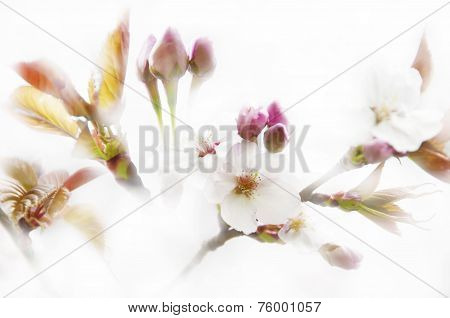 Flowers background on white