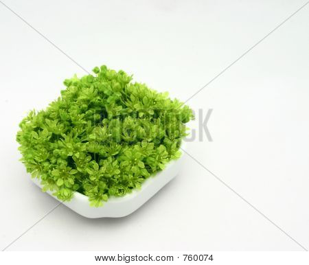 Fresh Green Flowers