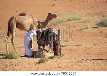 A beduin and his camel