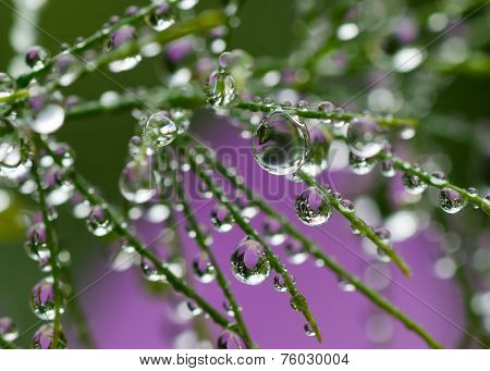 plant with beautiful colored water drop