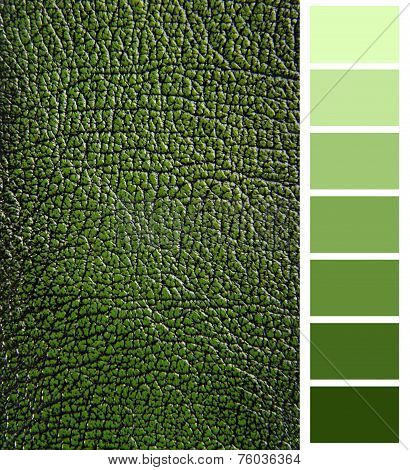 green leather color complimentary chart