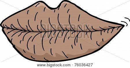 Single Chapped Lips