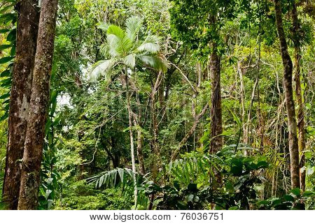 Forest In Mossman Gorge, Daintree National Park, Australia