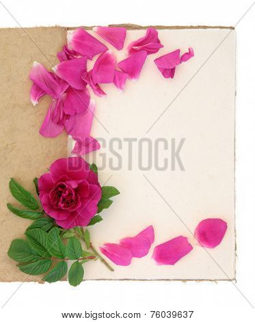 Old vintage notebook with red rose and petals over white background. Rosa rugosa.