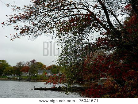 Fall trees by the lake