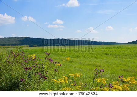 Flowers In Field