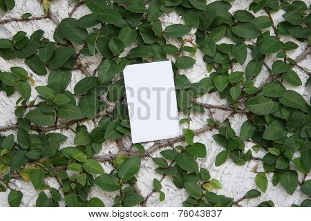 Leaves And Paper Card On Wall For Wallpaper
