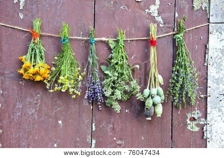 Various Flowers And Medical Herb Bunch On Wooden Grunge Wall