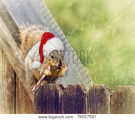 Christmas Squirrel Sitting On Fence In The Winter