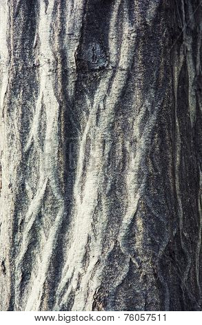 Detail View Of Tree Bark