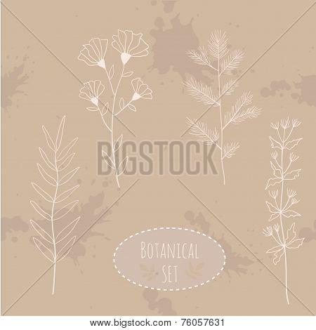 Botanical flowers set elements. Hand drawn illustration