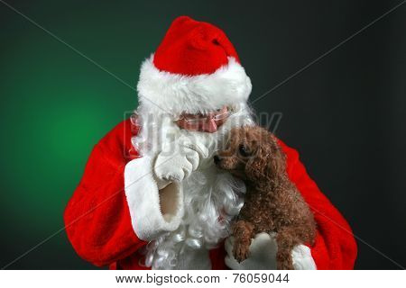 Santa Claus dressed in his Trademark Red Velvet Suit, holds a Small Brown Poodle Dog giving it love and treats for Christmas. Santa Claus loves all animals and especially small dogs. Merry Christmas