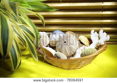 Composition Of Seashells