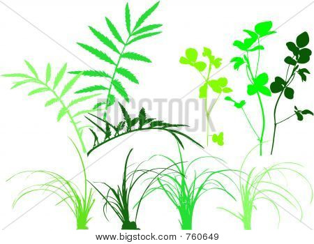 Foliage patterns - plants, grass, leaves, herbs