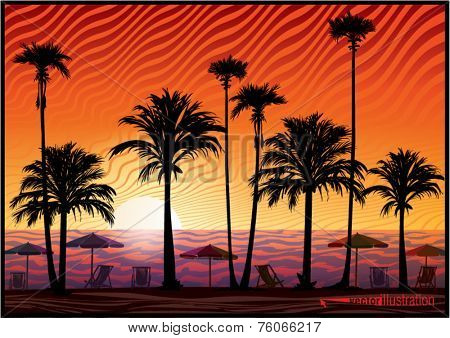 Palm trees silhouette at sunset. Vector illustration