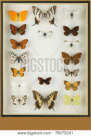 Cristal Box With Preserved Colored Butterflies