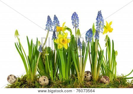 Quail Eggs With Spring Flowers