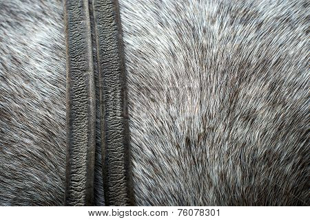 Pelt From A Horse