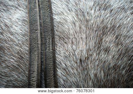 Pelt From A Horse