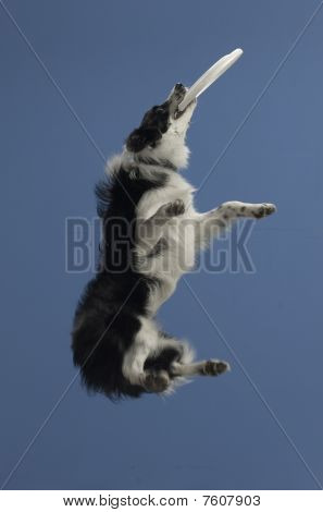 Dog jumps to catch 2